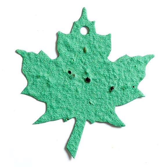 Seed Paper Shape Maple Leaf 3 - Sage Green