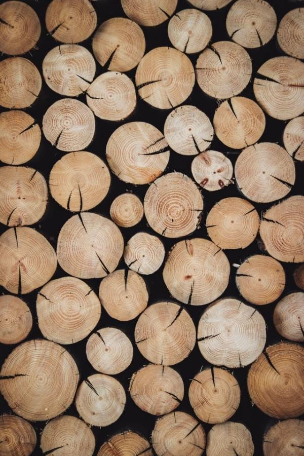 Eco Wood Might Not Be the Answer