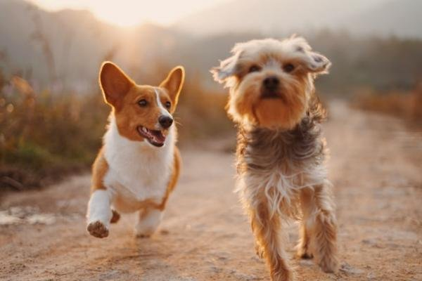 4 Ways to Keep Your Dogs Happy This Summer