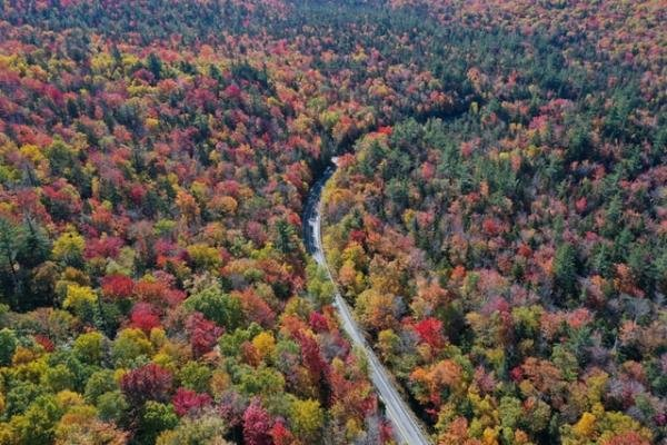Fall Foliage: Managing Your Lawn Responsibly