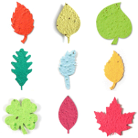 Seed paper shapes miscellaneous leaves
