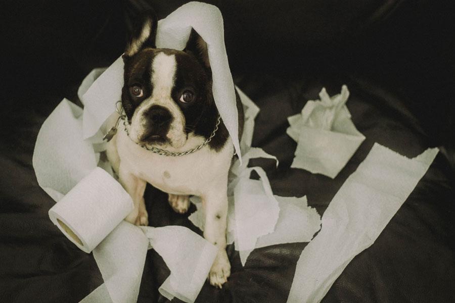 dog shreds toilet paper